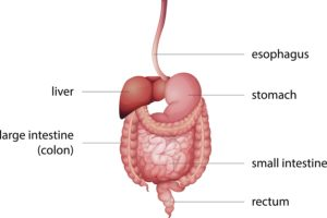 Overview of the GI Tract