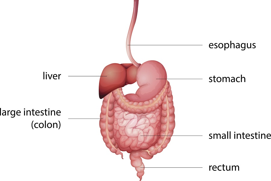 Overview Of The Gi Tract Before After Ostomy Surgery Shield